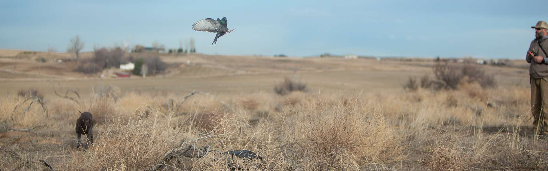 Lone Sage Bird Dogs - Photo Gallery